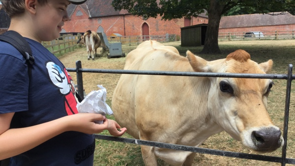 Ashdown Youth is a club for teenagers aged from 12-18 with a disability or additional needs. A young man visiting a far looking at a cow.
